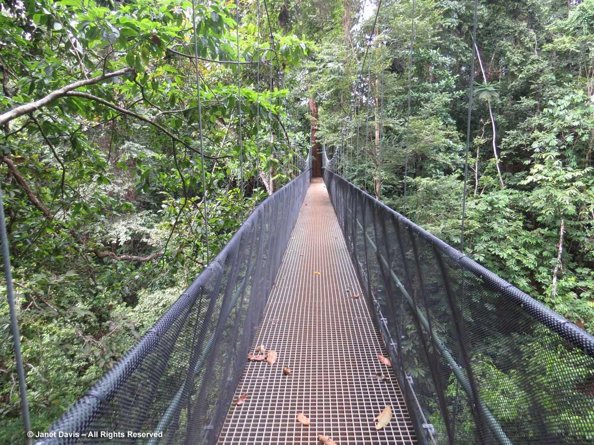Suspension bridge-El Remanso
