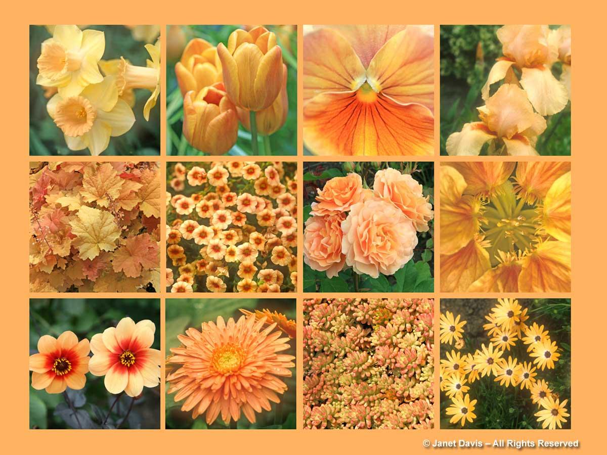 Apricot Flowers-ThePaintboxGarden