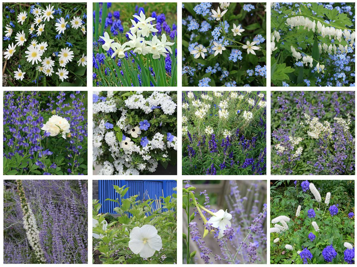 Blue and white flower combinations