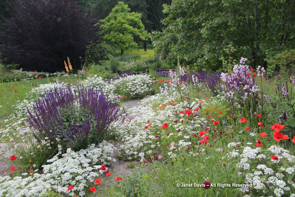 White garden designing white flowers garden design white border chanticleer orlaya grandiflora gravel garden mightylinksfo