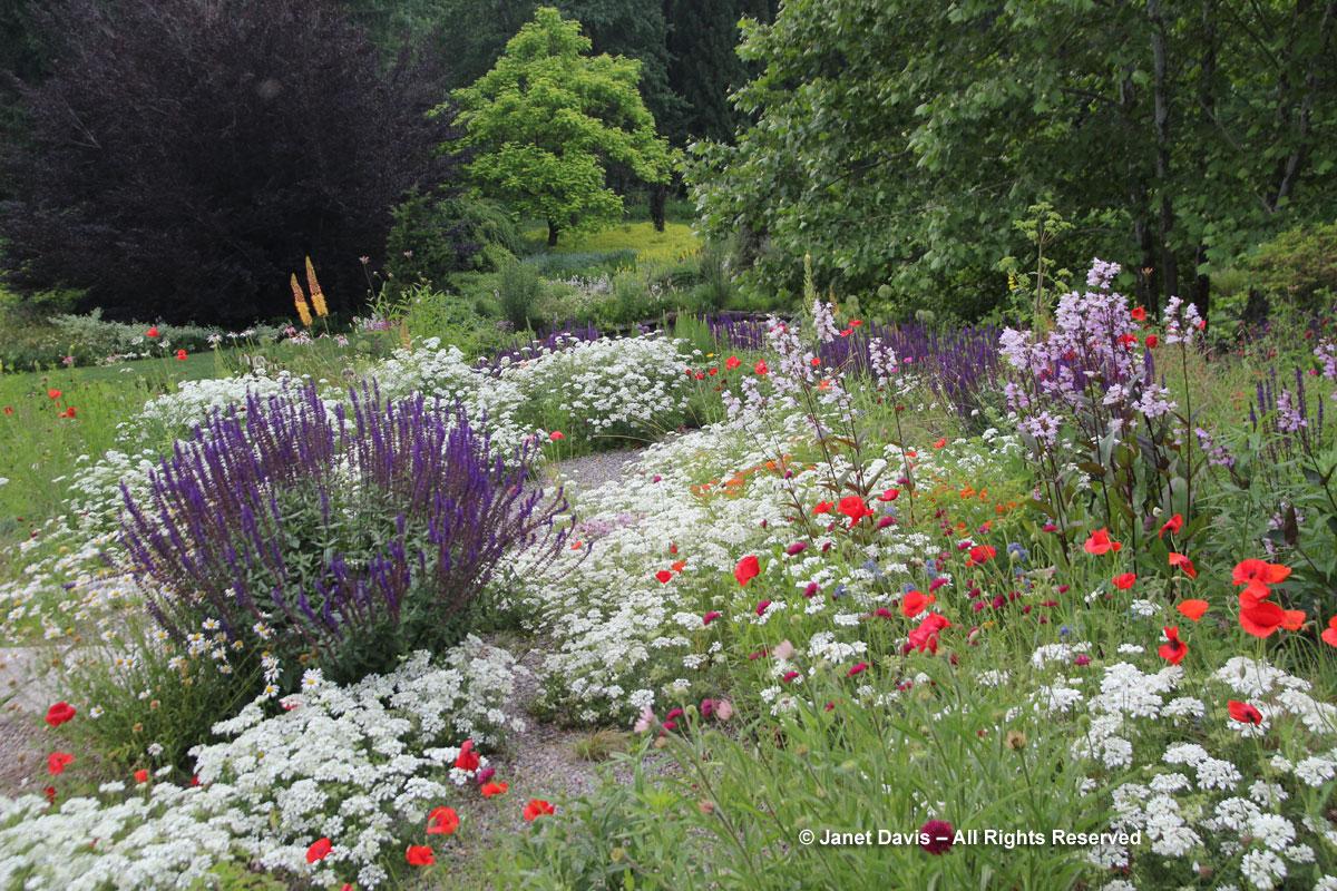 Chanticleer-Orlaya grandiflora-Gravel Garden