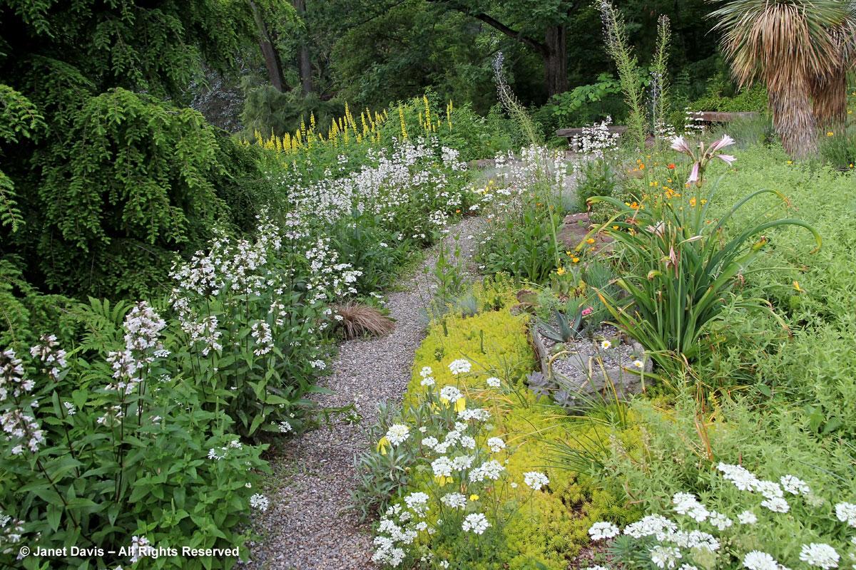 Chanticleer-Penstemon-Gravel Garden