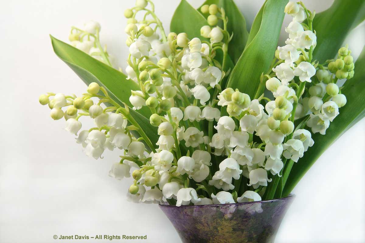 Convallaria majalis bouquet