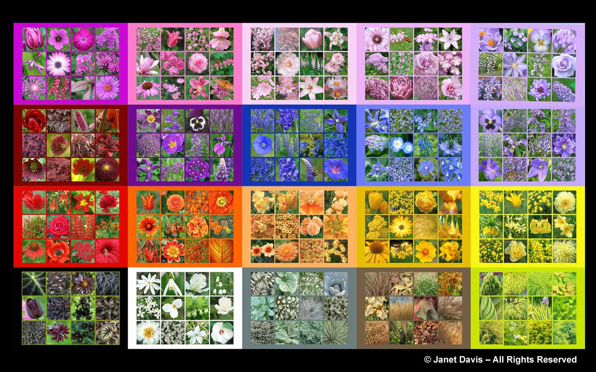 Flower Colour Array-ThePaintboxGarden