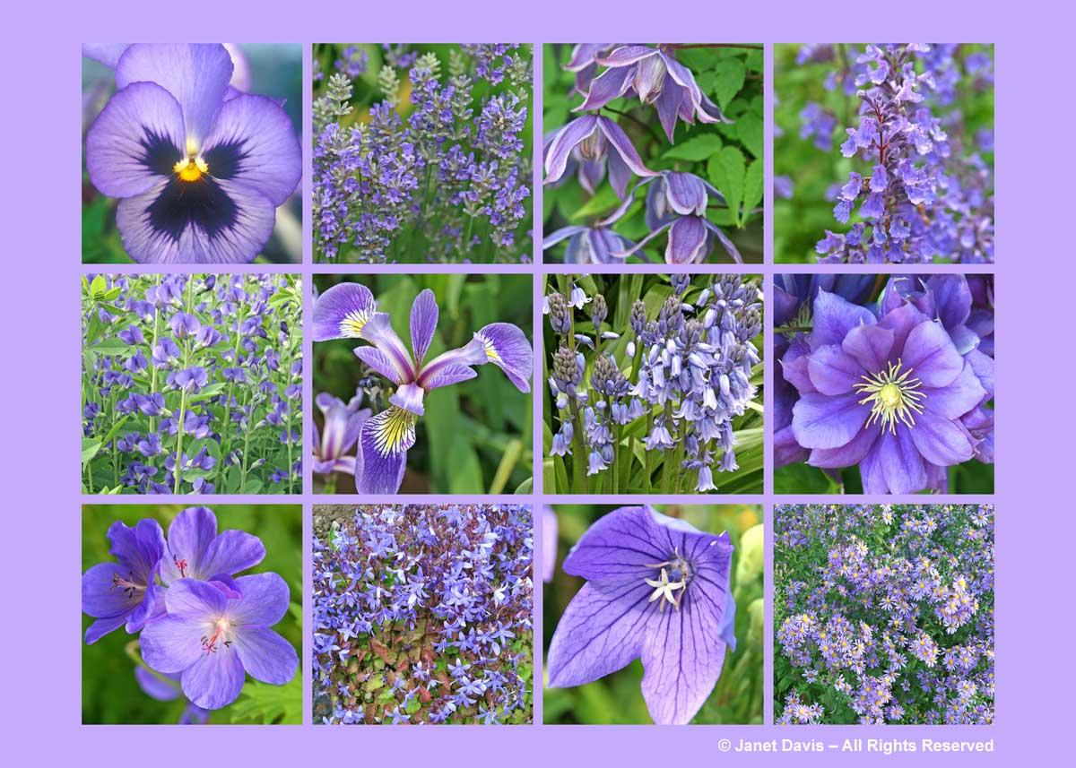 Lavender Purple Flowers Thepaintboxgarden