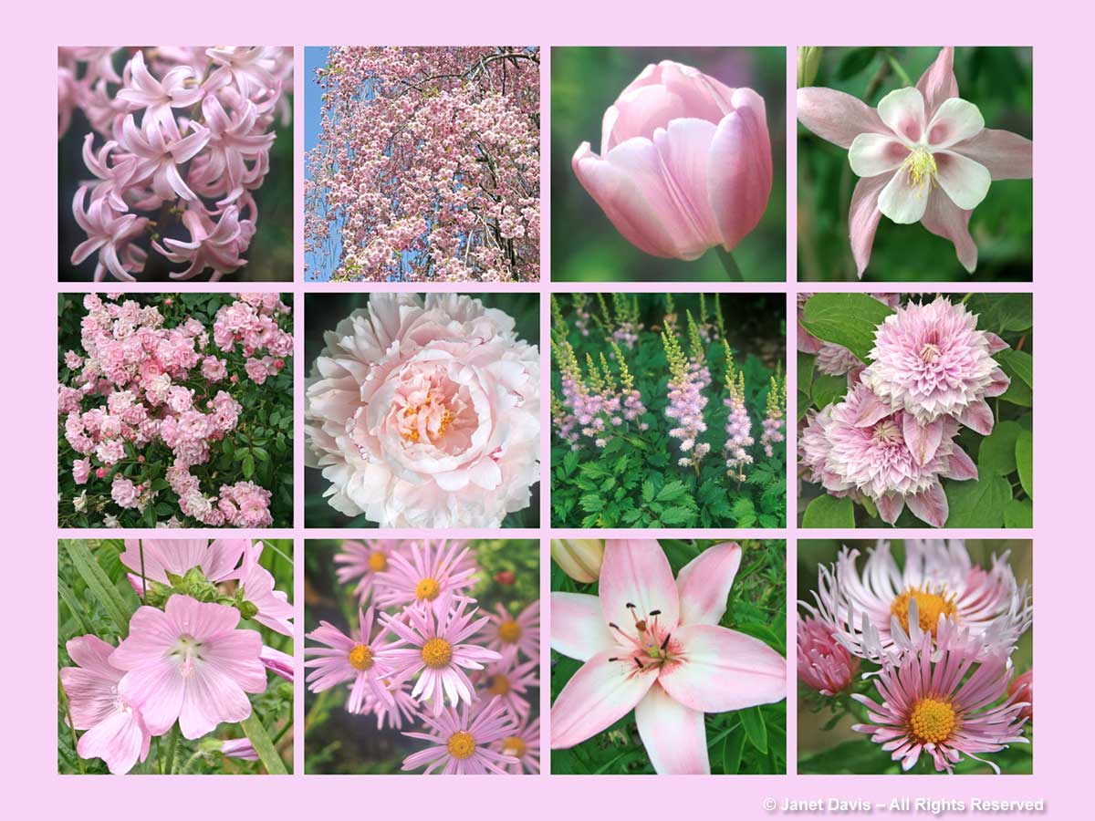 Light Pink Flowers-ThePaintboxGarden