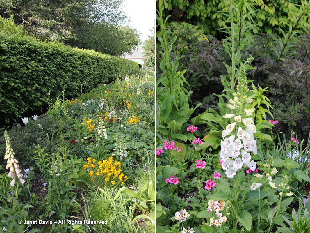 New York Botanical-Four Seasons Border-Foxgloves