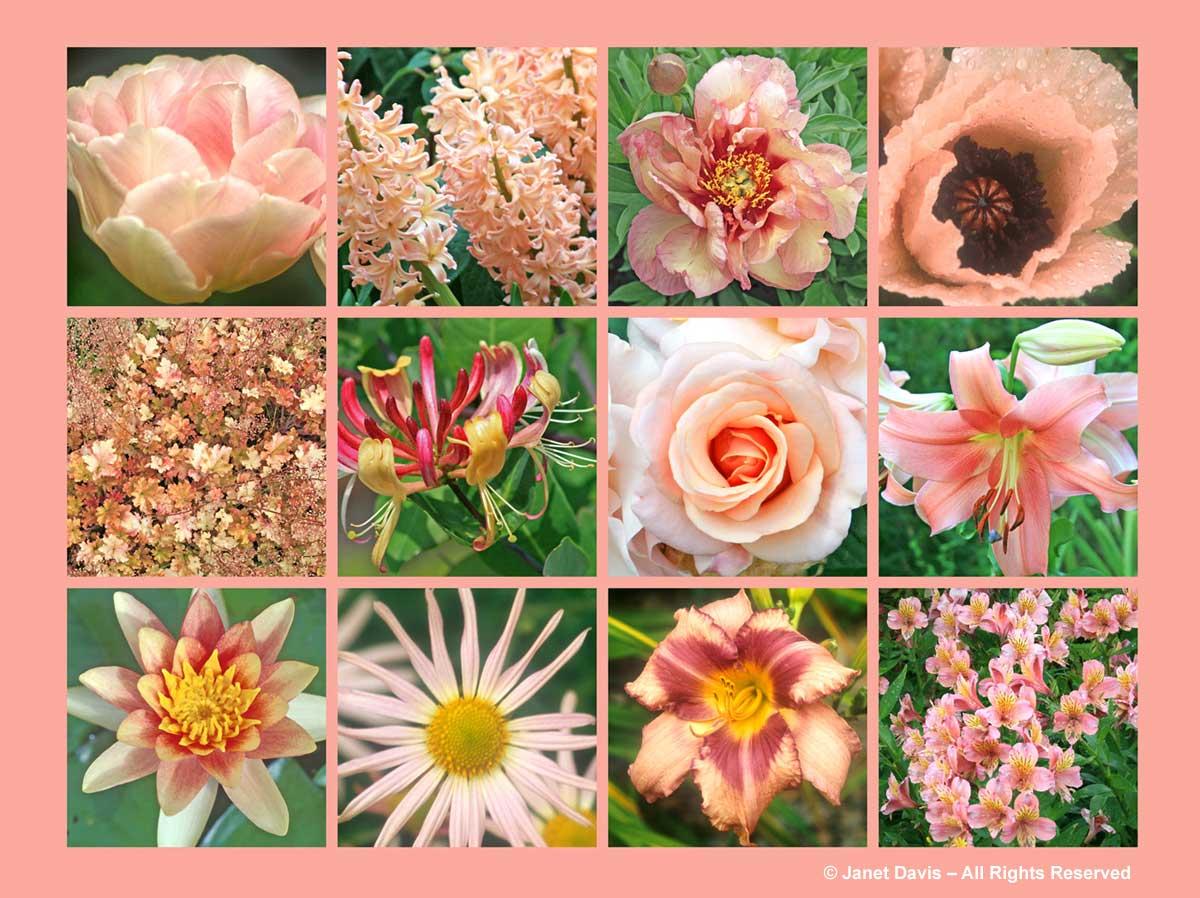 Peach Flowers-ThePaintboxGarden