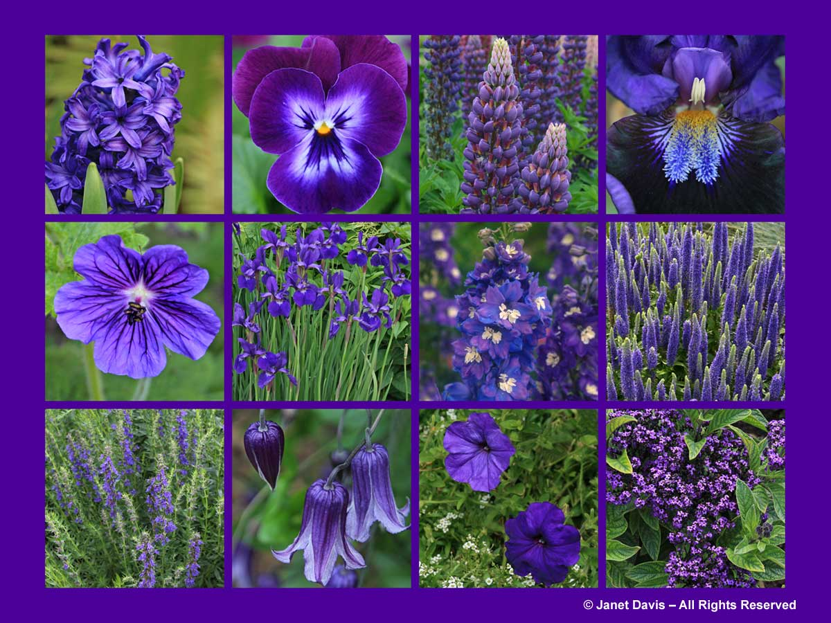 Purple Flowers-ThePaintboxGarden