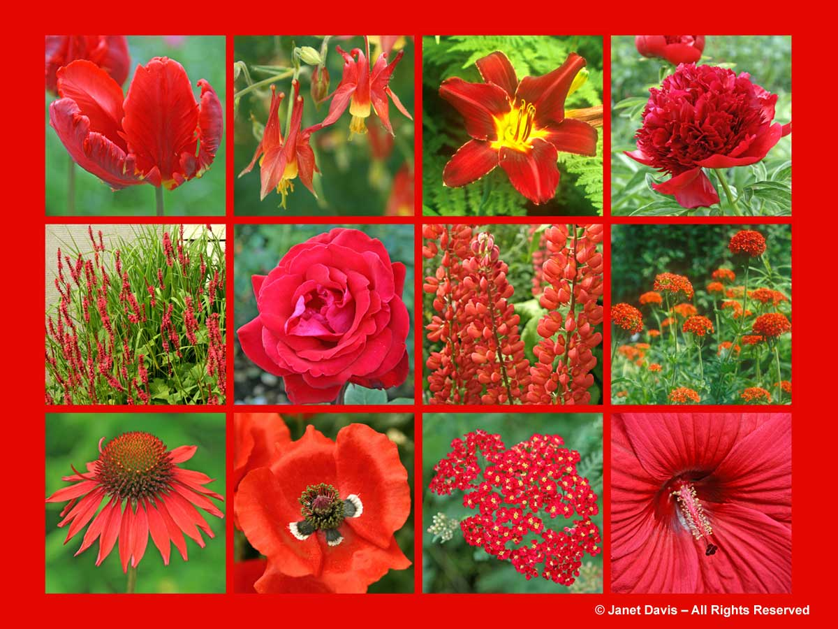 Red Flowers-ThePaintboxGarden