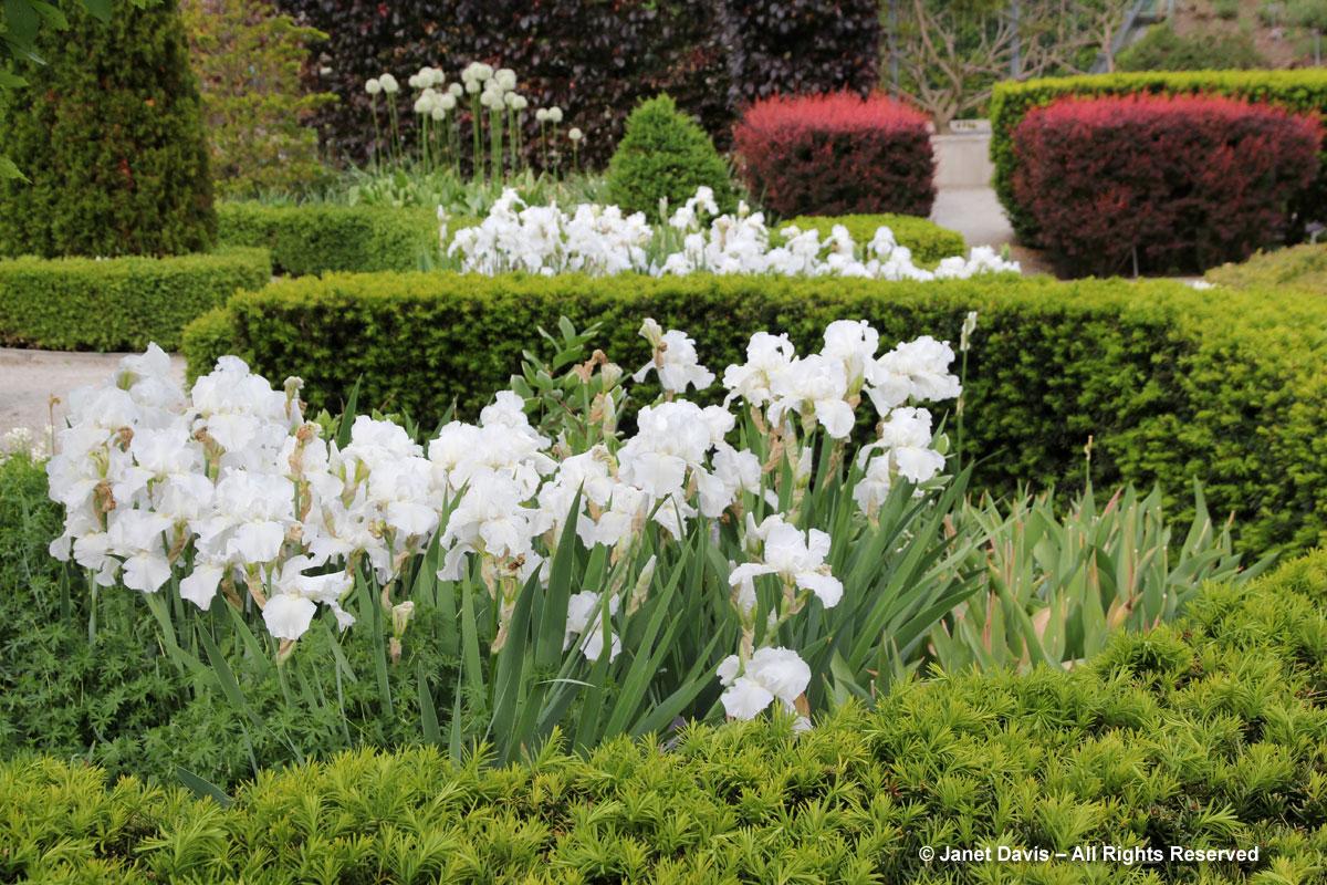 TBG Beryl Ivey Knot Garden Irises