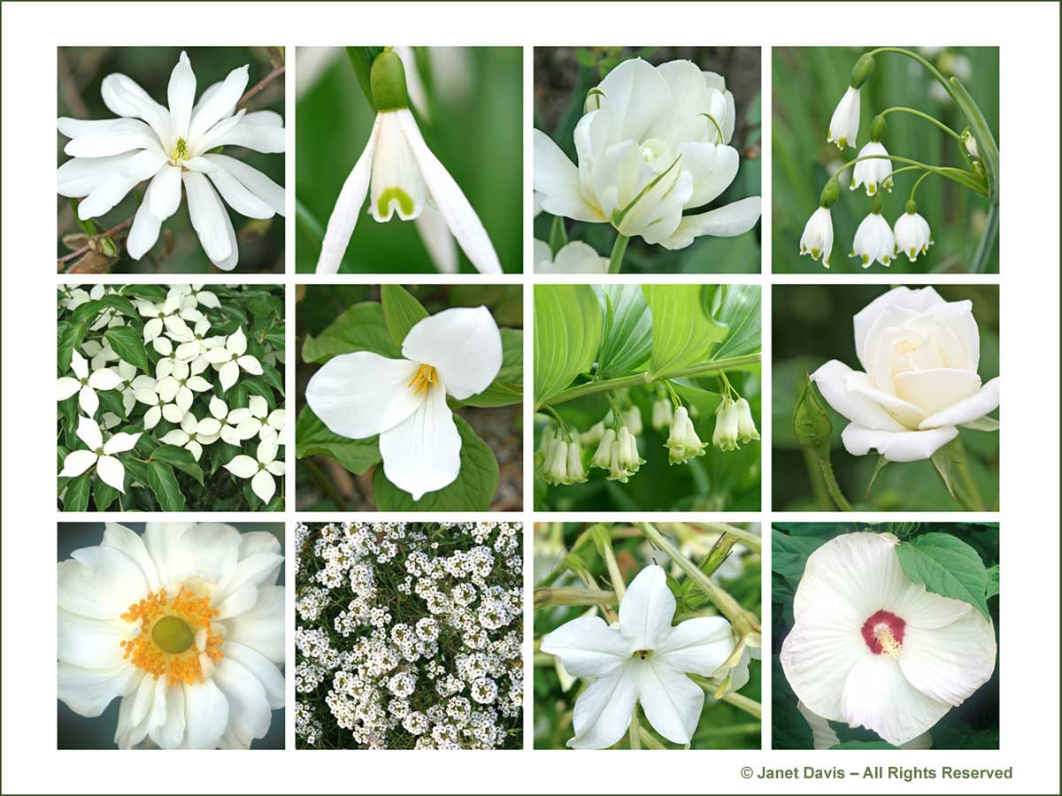 White Garden Designing White Flowers Garden Design White Border