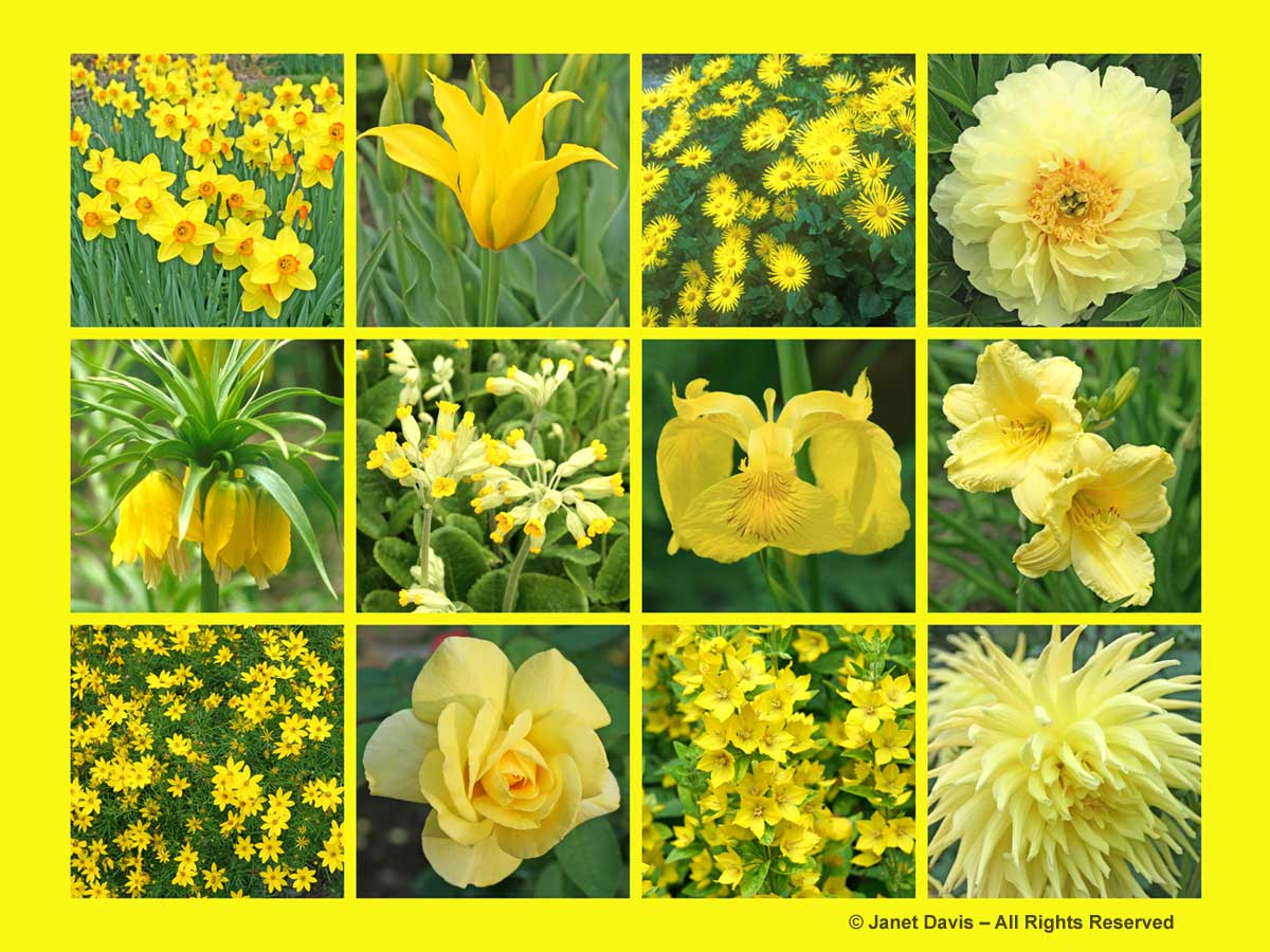 Yellow Flowers-ThePaintboxGarden