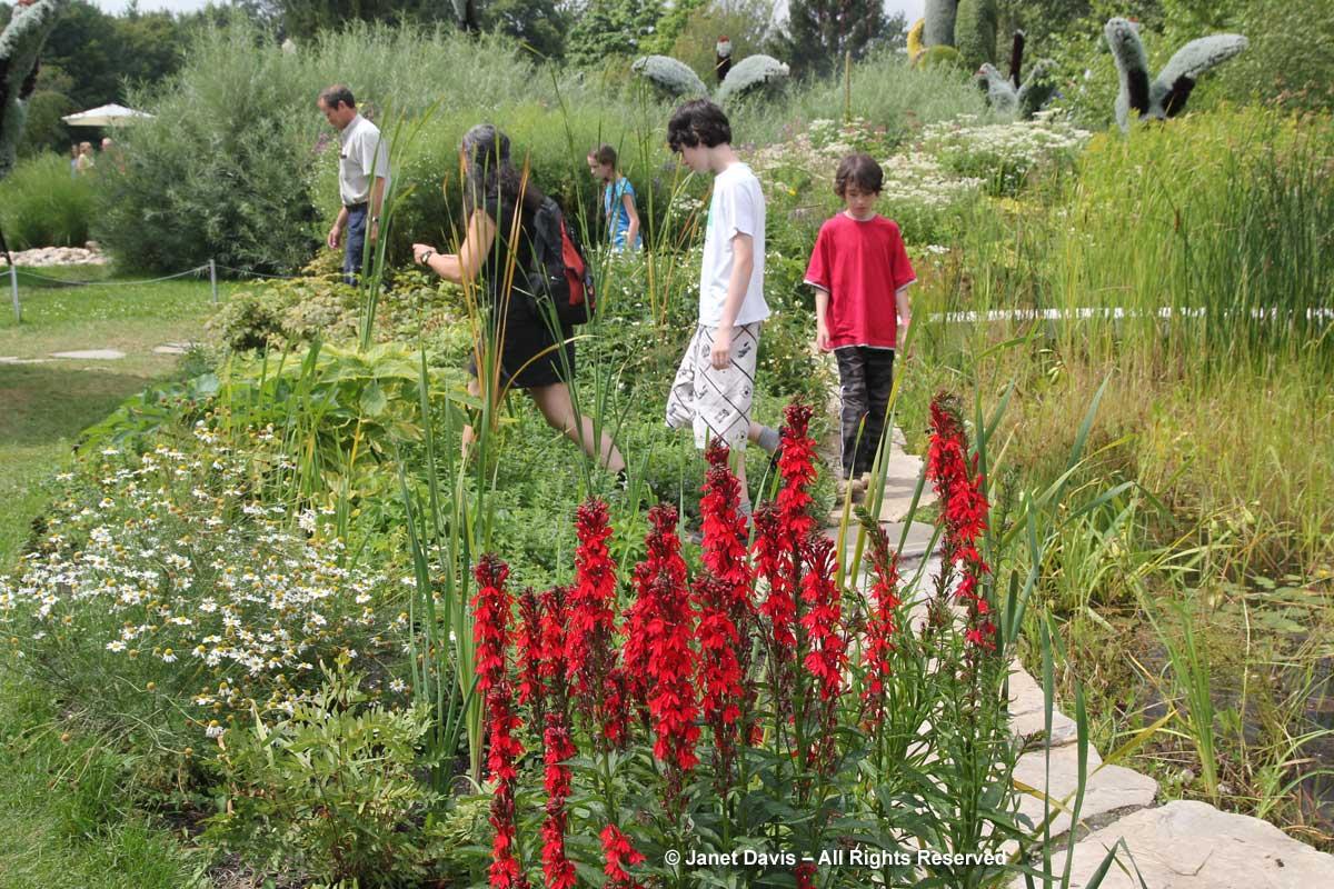 Lobelia cardinalis-Cardinal flower-Montreal Botanical Garden