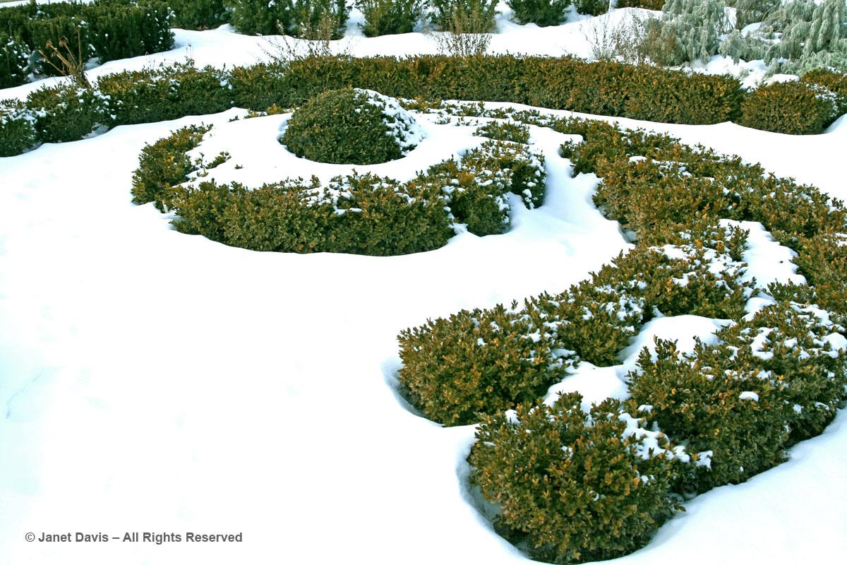 Boxwood Spiral-Beryl Ivey Knot Garden-Toronto Botanical Garden