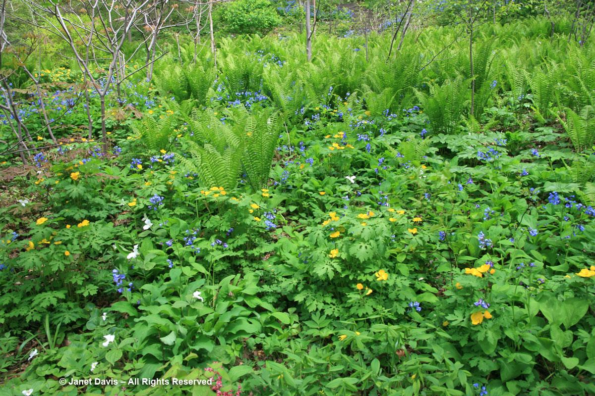 Casa Loma-Wildflower Garden
