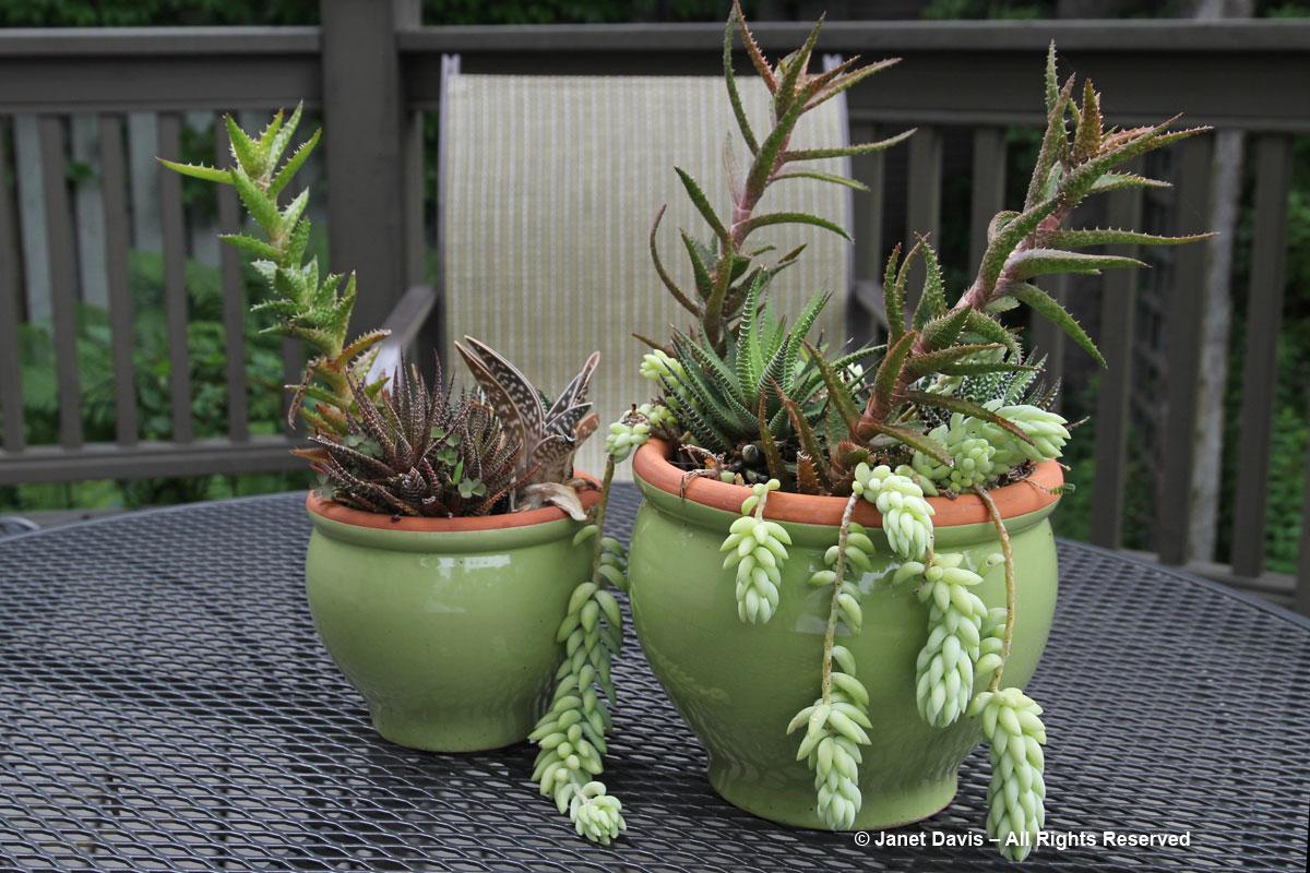 Succulents-Green Pots