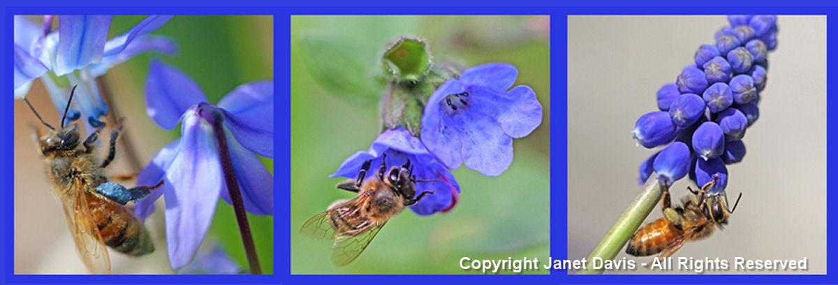 Blue Bee Plants