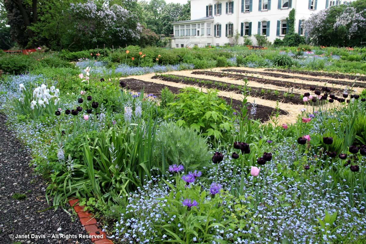Spadina House Gardens-Forget-me-nots