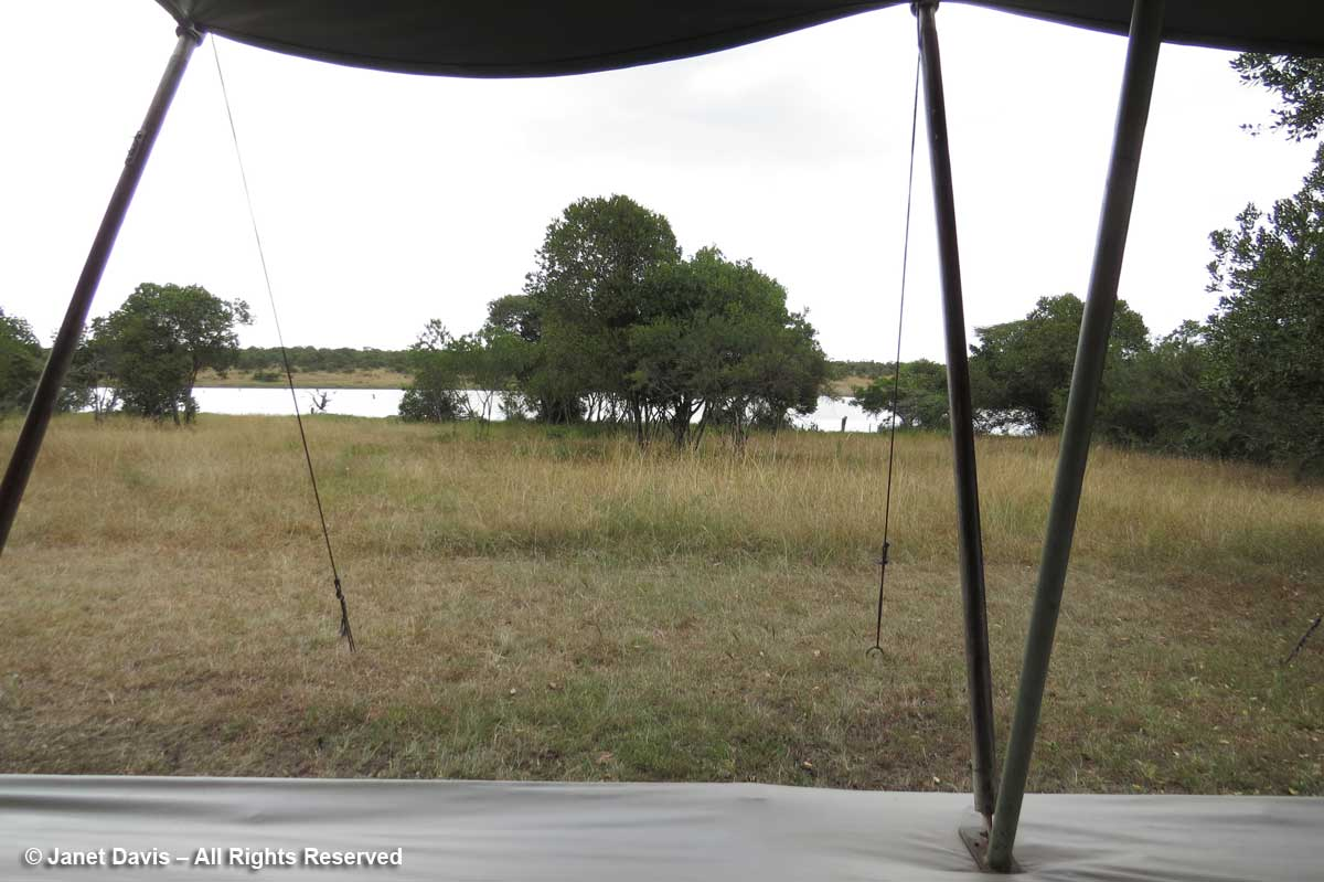 Tent view of waterhole-Kicheche-Laikipia