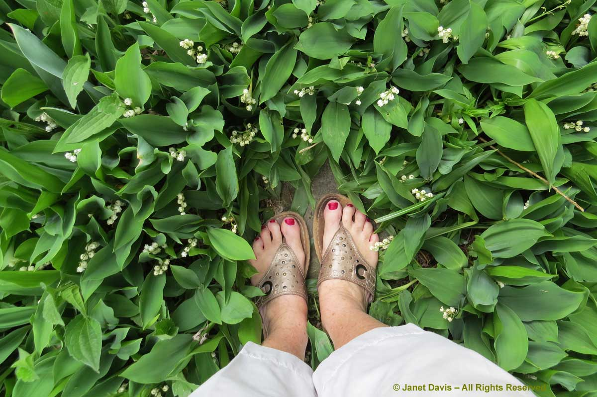 04-Lily of the valley & my feet