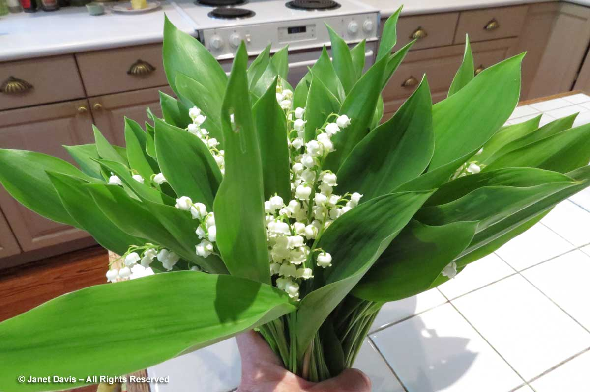 06-Lily-of-the-valley-bouqu