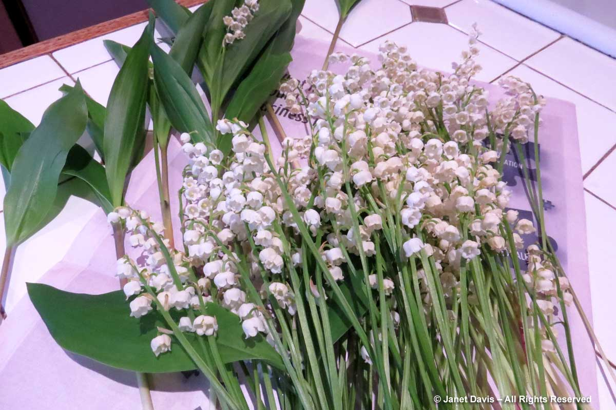 08-Lily of the valley-Floral stems