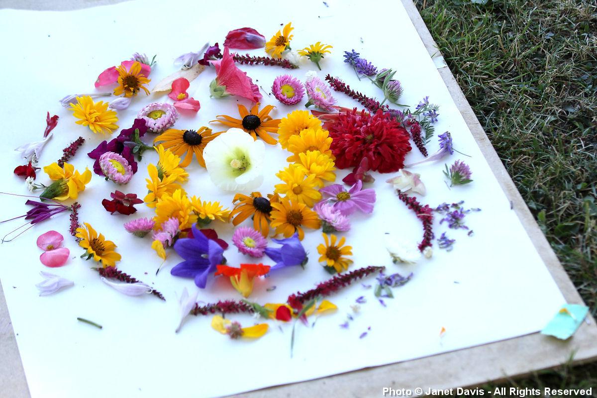 Artful Garden-Kids Art Camp
