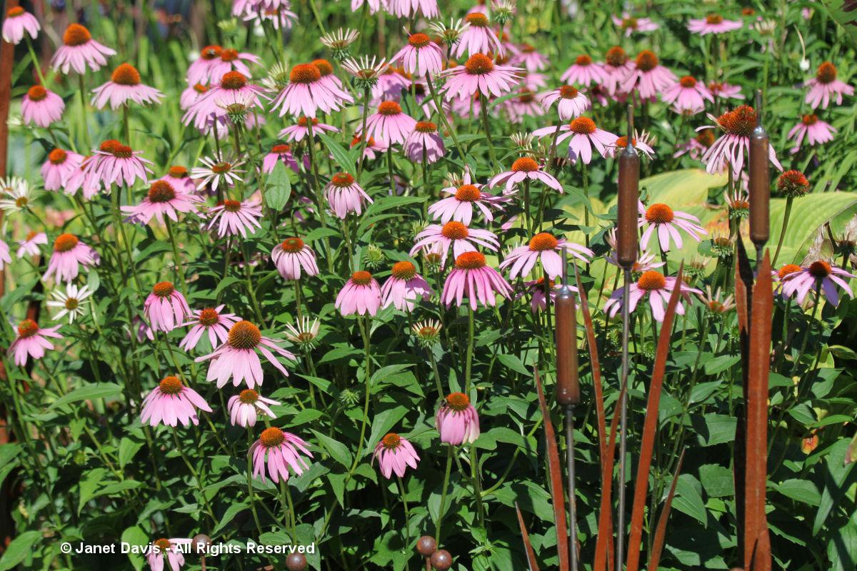 Artful Garden-Lino Barbosa-Bulrush