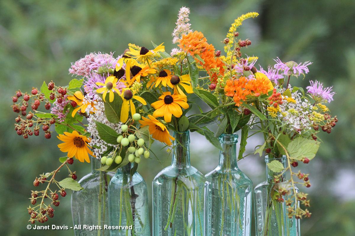 Asclepias tuberosa-August 16-Bouquets