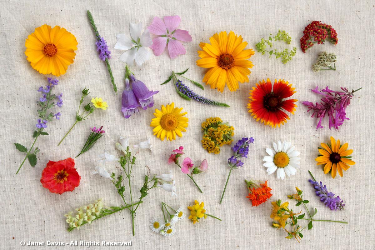 Asclepias tuberosa & plant companions-July 7-2013