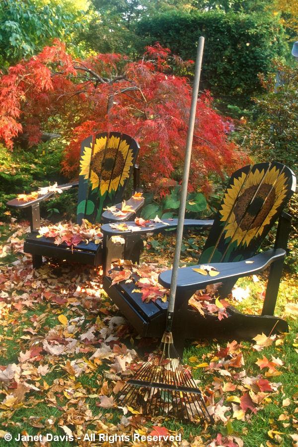 Chairs-Muskoka-Adirondack Style