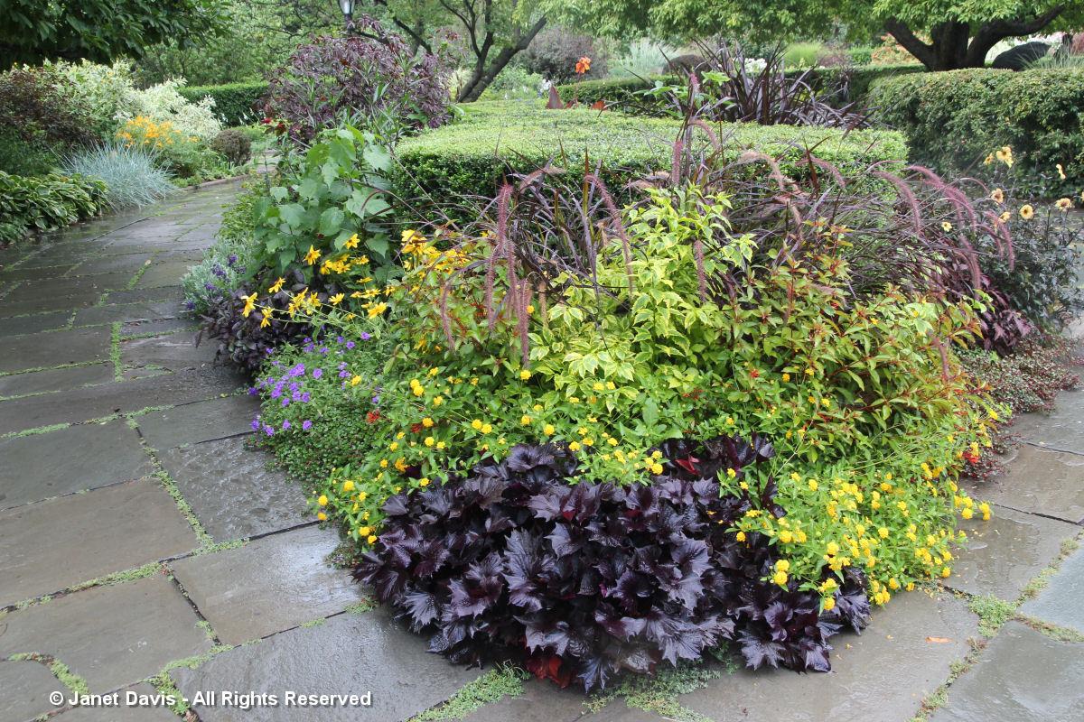 Conservatory Garden-Black Heuchera