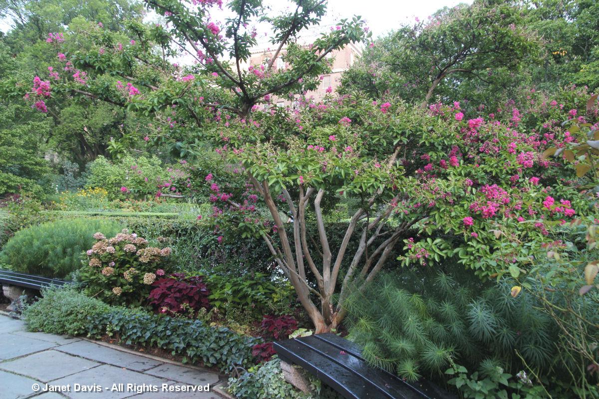 Conservatory Garden-Crape Myrtle