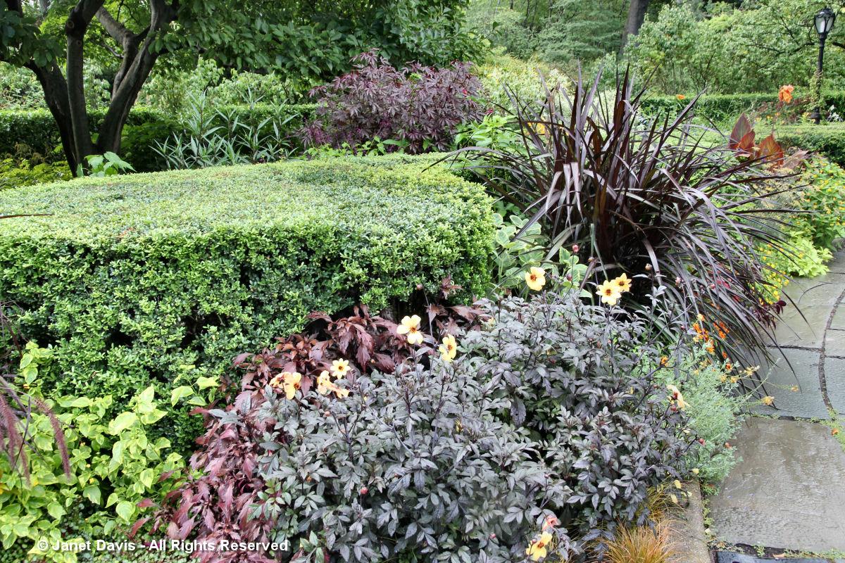 Conservatory Garden-Dark Foliage