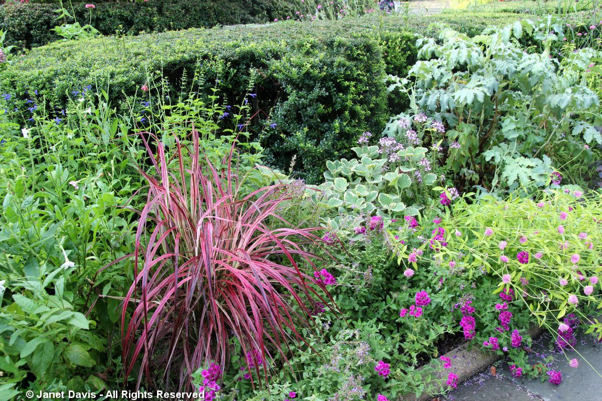 Conservatory Garden-Pennisetum 'Fireworks'