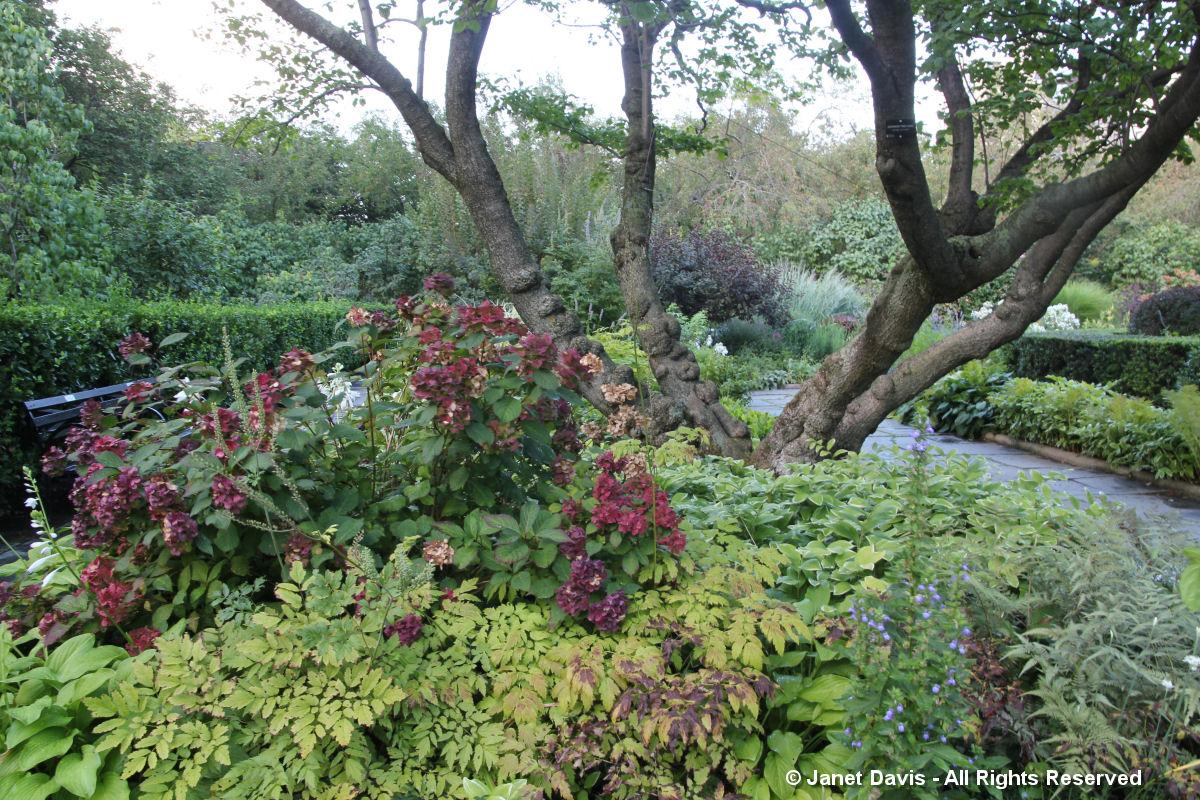 Conservatory Garden-Red Hydrangea flowers