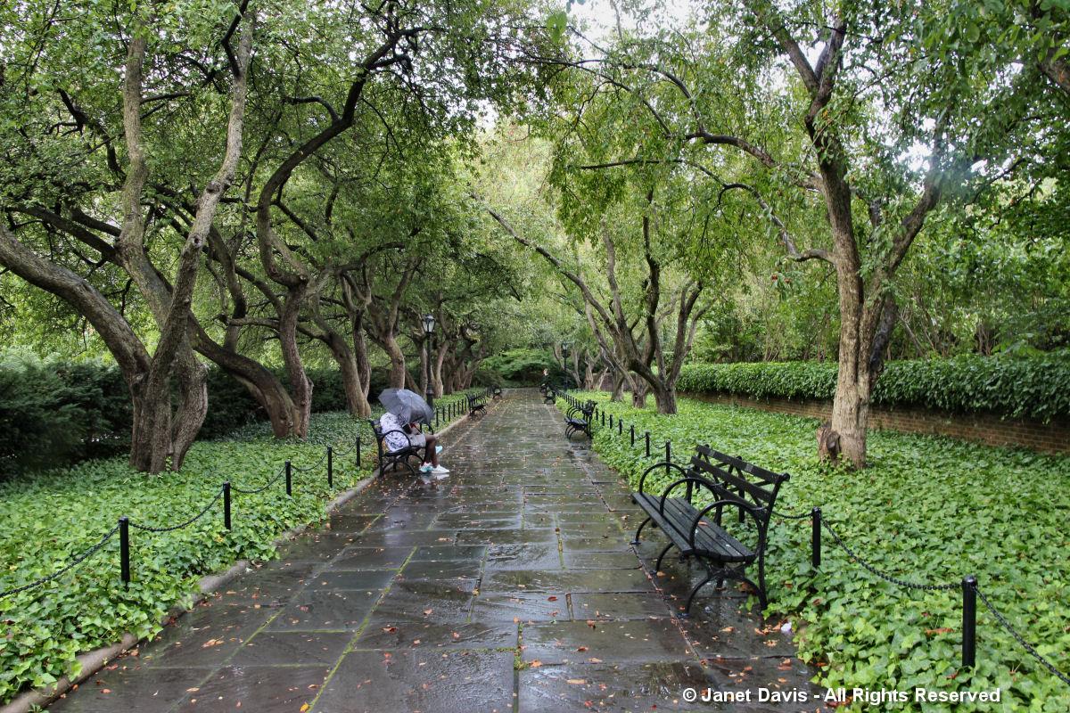 Rainy Allee-Conservatory Garden