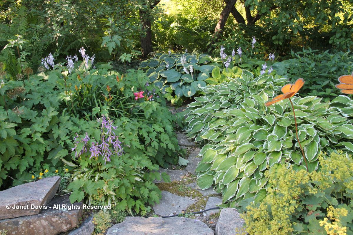 Suzann Partridge-Shady Garden