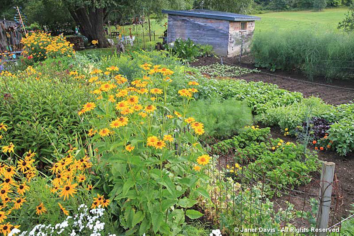 Suzann Partridge-Vegetable Garden