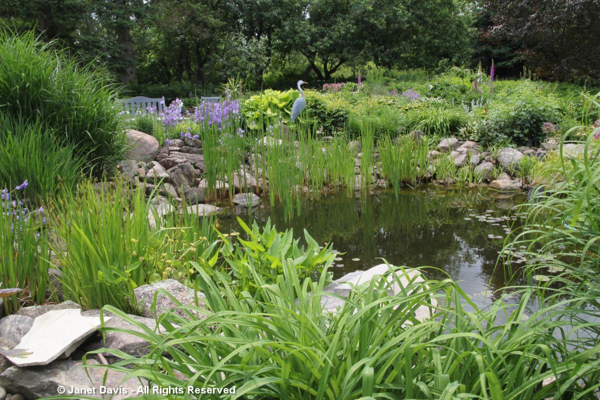 Suzann Partridge-pond