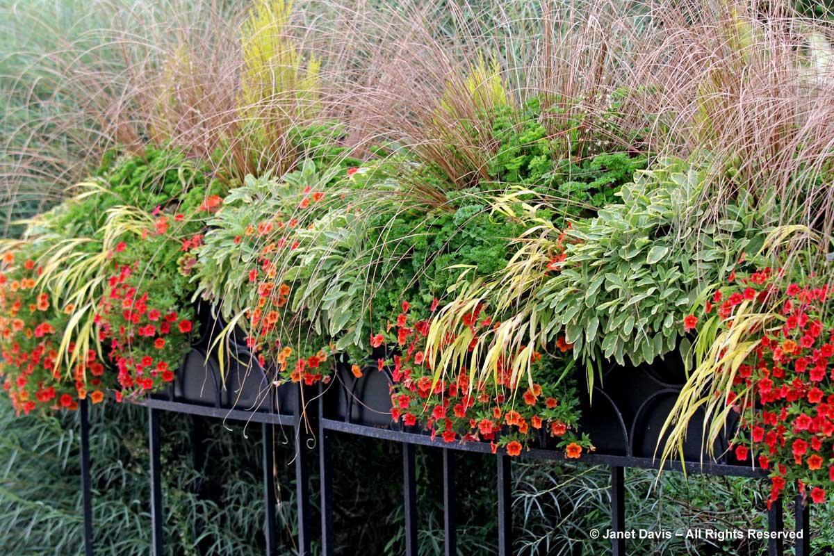 Toronto Botanical Garden- Containers