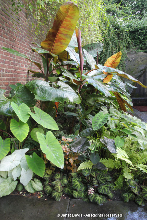 Tropical plants-Conservatory Garden