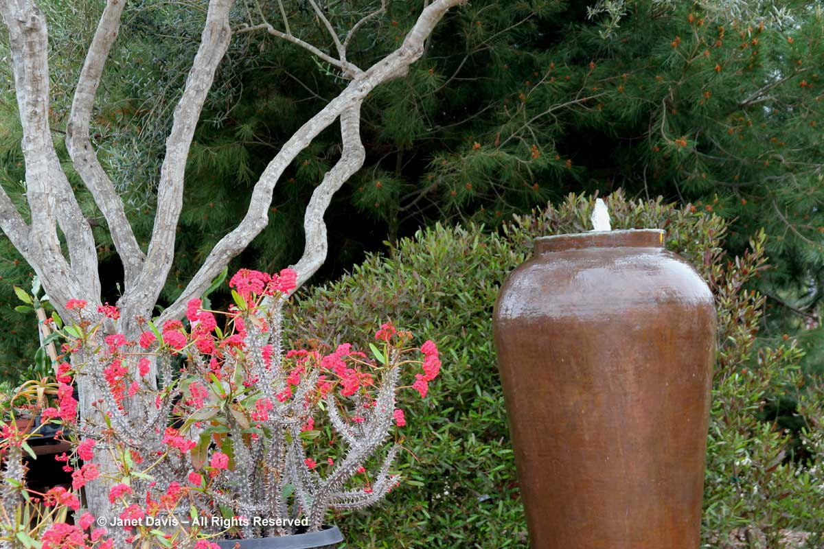 fountain-seaside-gardens-carpenteria