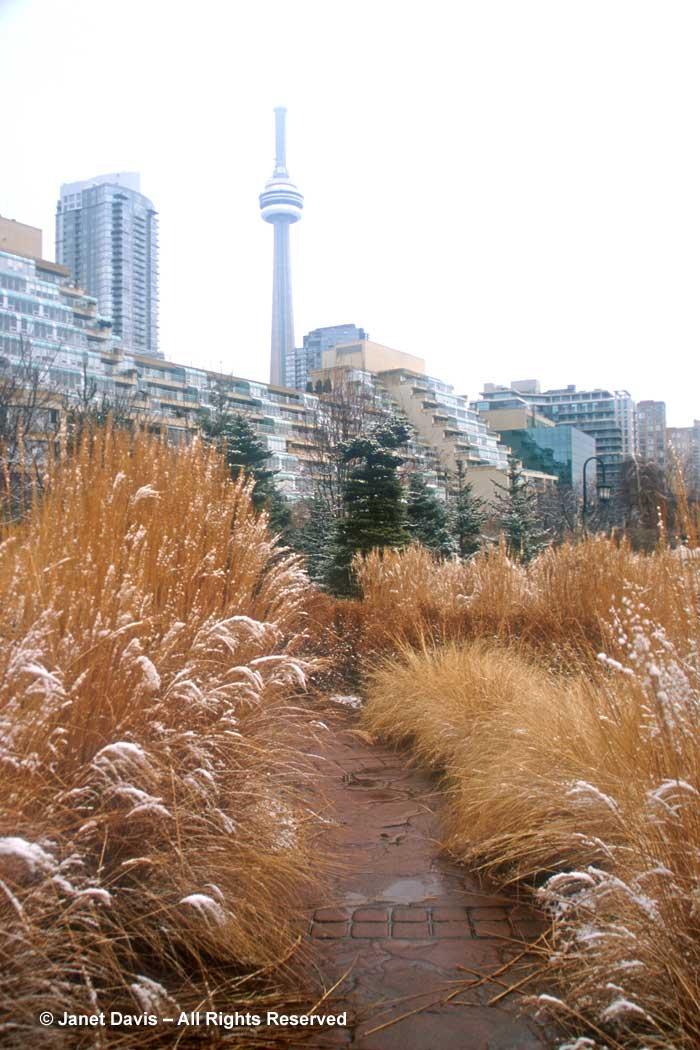 grasses-music-garden