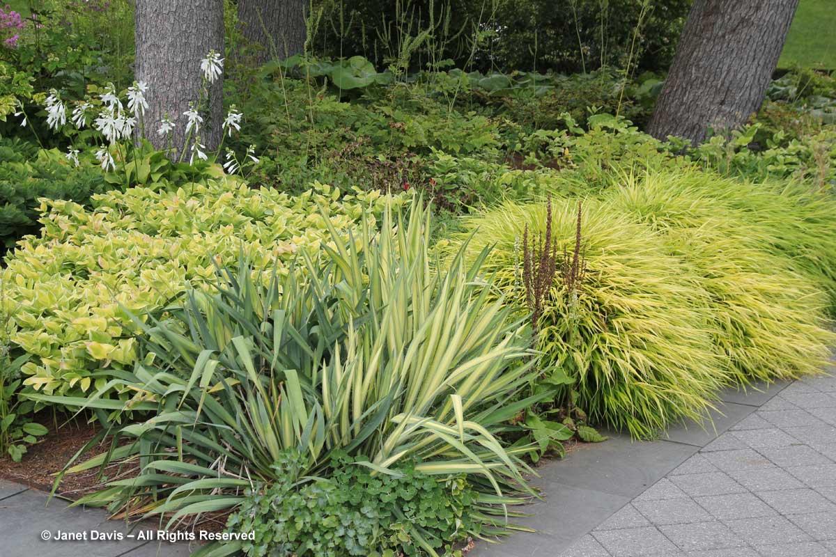 NYBG-Jane Watson Irwin Perennial Garden-Chartreuse