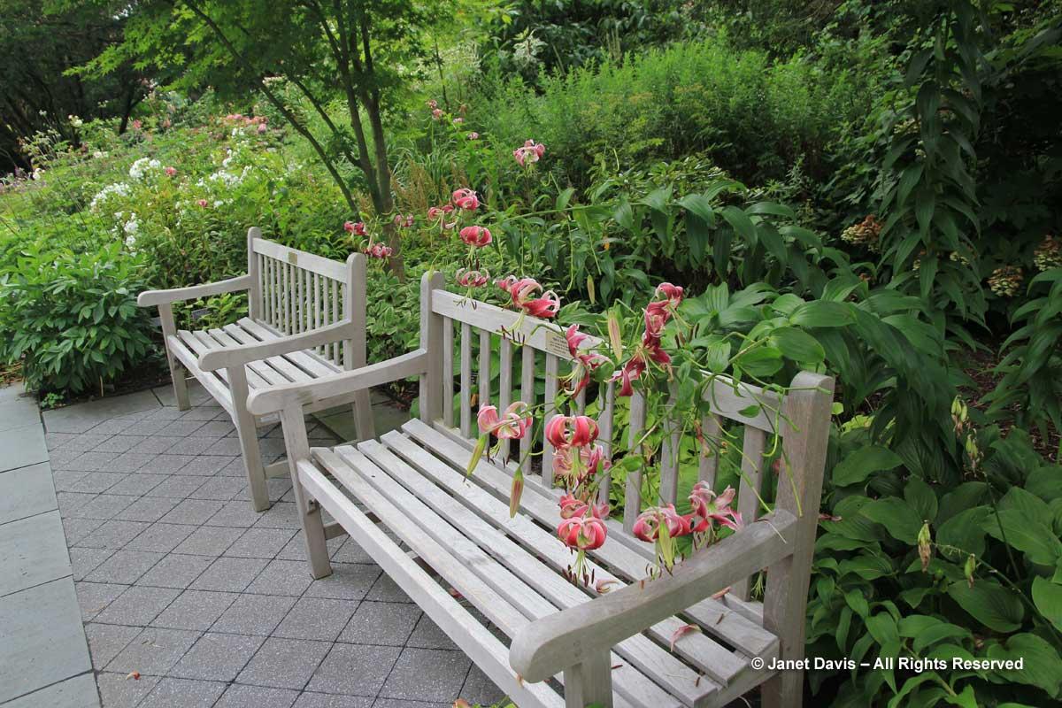 NYBG-Jane Watson Irwin Perennial Garden-July 2011