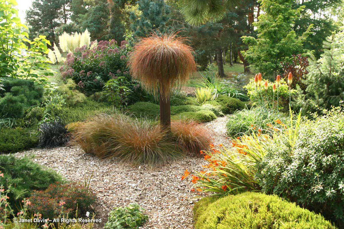 northwest-garden-nursery-carex-testacea