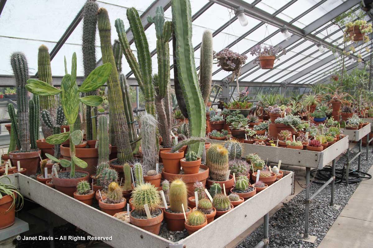 wave-hill-cactus-succulent-garden