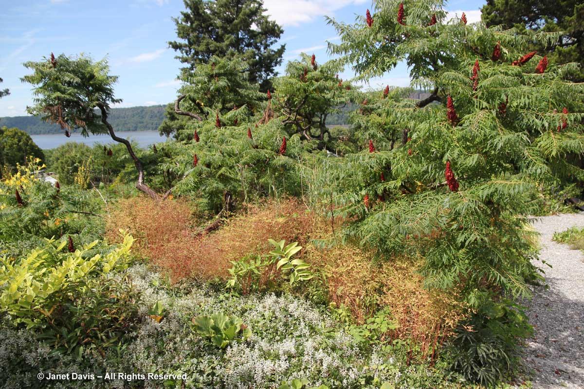 wild-garden-wave-hill-august3